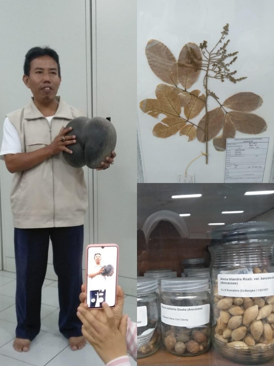 Herbarium di kebun raya Bogor