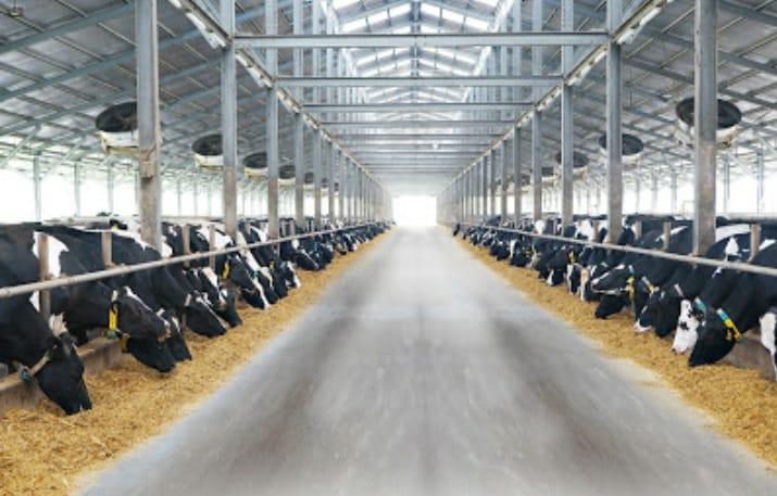KIN Fresh Milk dengan susu sapi A2