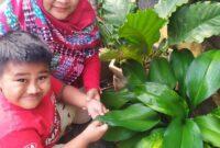Berkebun bersama Bunda selama di rumah aja
