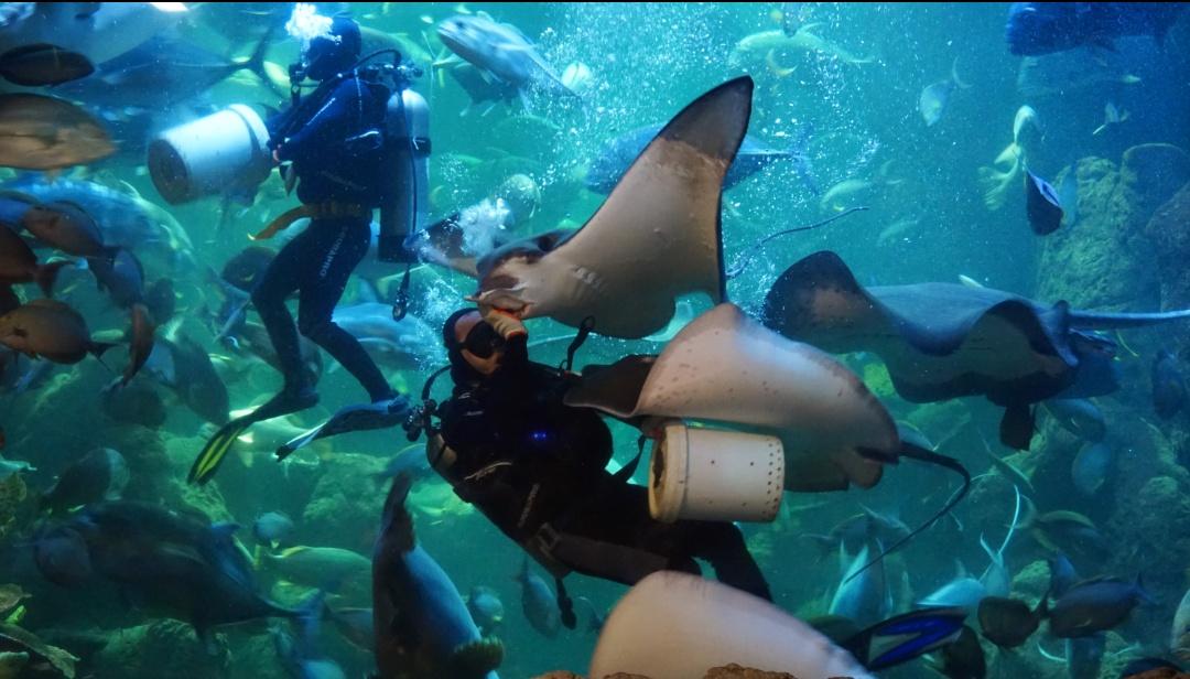 Yuk ajak si kecil liburan di Sea World Ancol